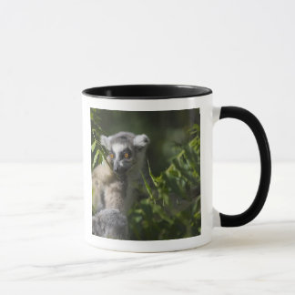 Ring tailed lemur (Lemur catta), Madagascar Mug