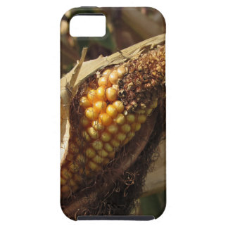 Ripe and ready to harvest ear of corn iPhone 5 cases