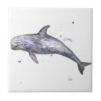 Risso Dolphin Illustration Small Square Tile