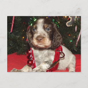 English Springer Spaniel Christmas Puppy Gifts on Zazzle NZ