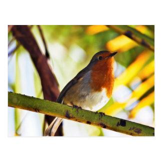 Robin red breast bird postcard