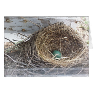 Robin's egg in the nest, envelope included greeting card