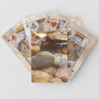 rock pool bicycle playing cards