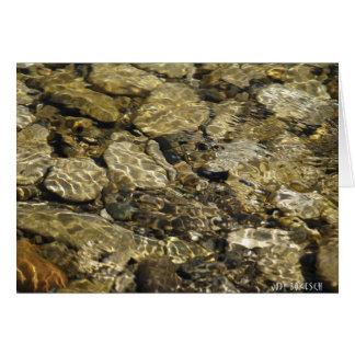 Rock Pool Nature Collection Card