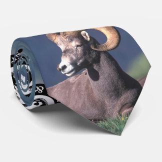 Rocky Mountain Bighorn Sheep Tie