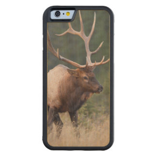 Rocky Mountain Elk Carved Maple iPhone 6 Bumper Case