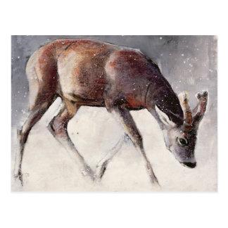 Roe Buck Winter 2000 Postcard