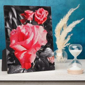 Romantic Rose Flowers #5 Photo Plaques
