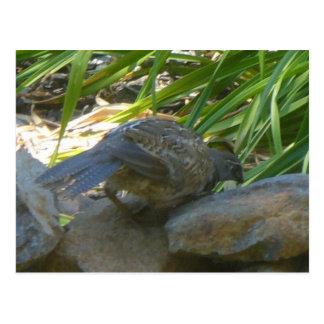 Rookie quail postcard