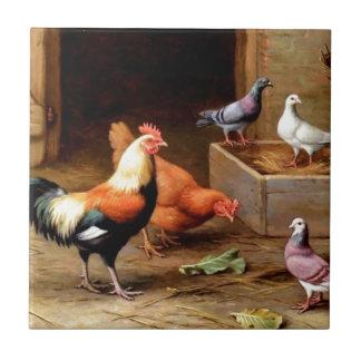 Rooster hen pigeons tile