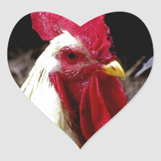 rooster observing  peaceful world heart sticker