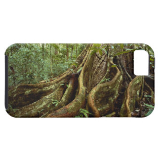 Roots and Trunk of Sloanea Tree Tough iPhone 5 Case