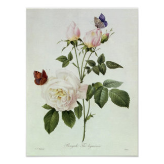 Rosa: Bengale the Hymenes Poster