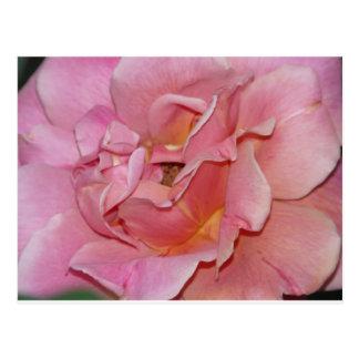 rose,swirly pink postcard