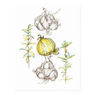 Rosemary Herb Garlic Onion Kitchen Art Drawing Postcard