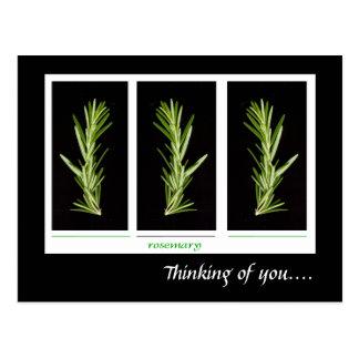 Rosemary - herbs postcard