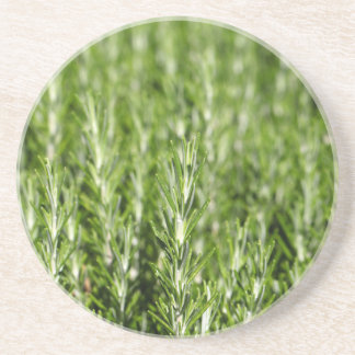 Rosemary (Rosmarinus officinalis) branches Beverage Coasters
