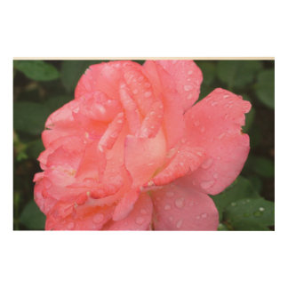 ROSES WOOD CANVASES