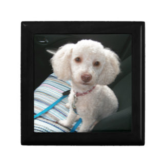 Rosie the Poodle Gift Box