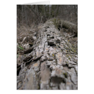 Rotting cottonwood log card