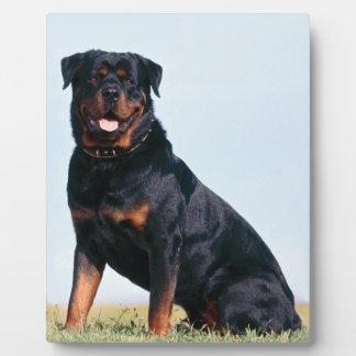 Rottweiler Portrait 8x10 with Easel Plaque