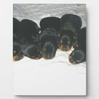 Rottweiler Puppies Plaque