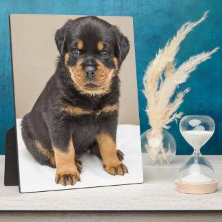 Rottweiler puppy portrait plaque
