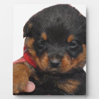 Rottweiler Puppy Red Plaque