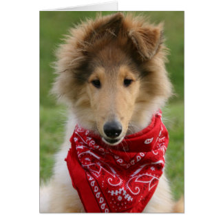 Rough collie puppy dog cute photo blank note card