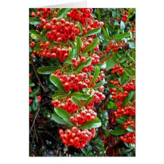 Rowan Berries - Season's Greetings Holiday Card