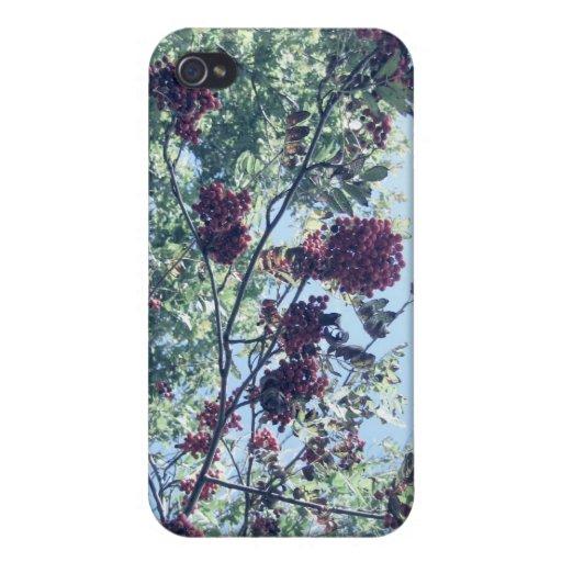 Rowan Sky iPhone 4 Cover