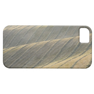 Rows of Harvested Wheat Field, Val d'Orcia, iPhone 5 Cover