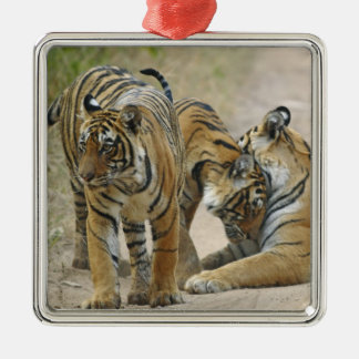 Royal Bengal Tiger and young ones - touching Christmas Ornament