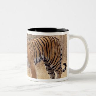 Royal Bengal Tiger walking around dry Two-Tone Coffee Mug