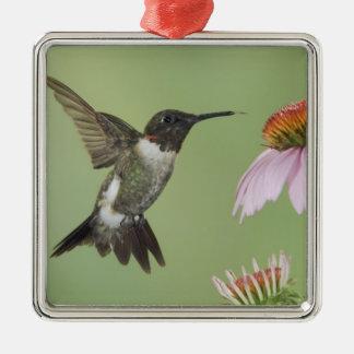 Ruby-throated Hummingbird, Archilochus 3 Silver-Colored Square Decoration