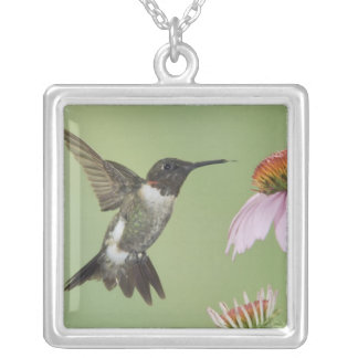 Ruby-throated Hummingbird, Archilochus 3 Silver Plated Necklace