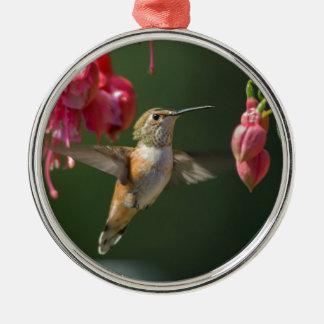 Rufous Hummingbird feeding on a Fuchsia Christmas Ornament