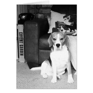 Rupert The Beagle Dog Blank Greetings Card