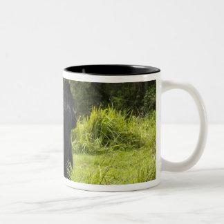 Rwanda, Volcanoes National Park. Mountain 2 Two-Tone Coffee Mug