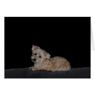 Sad Puppy Get Well Card