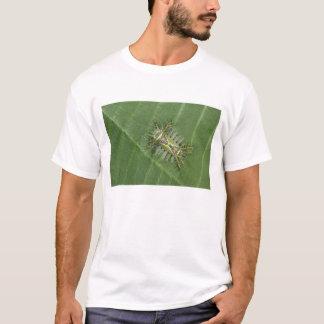 Saddleback moth, Acharia sp., poisonous T-Shirt