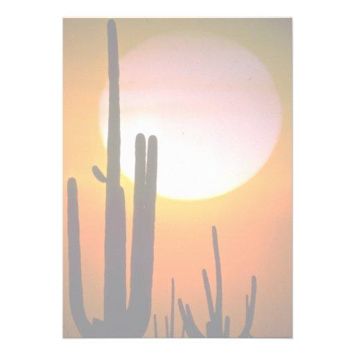 Saguaro cactus, Sonoran Desert, U.S.A. Desert Custom Announcements
