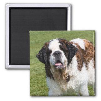 Saint Bernard dog fridge magnet, gift Magnet