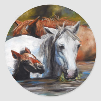 Salt River Foal Round Sticker