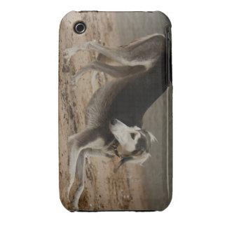 Saluki wind dog iPhone 3 covers