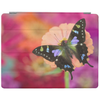 Sammamish Washington Photograph of Butterfly 11 iPad Cover