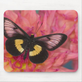Sammamish Washington Photograph of Butterfly 17 Mouse Pad