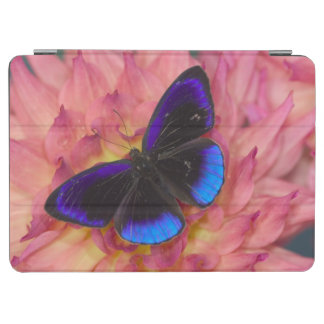 Sammamish Washington Photograph of Butterfly 18 iPad Air Cover