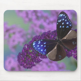 Sammamish Washington Photograph of Butterfly 30 Mouse Pad
