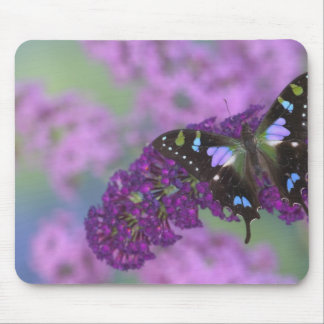 Sammamish Washington Photograph of Butterfly 32 Mouse Pad